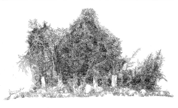 "April 11th – June 13th: 5 Press Gallery & Press Street Gardens Present ""Metaphyta"""
