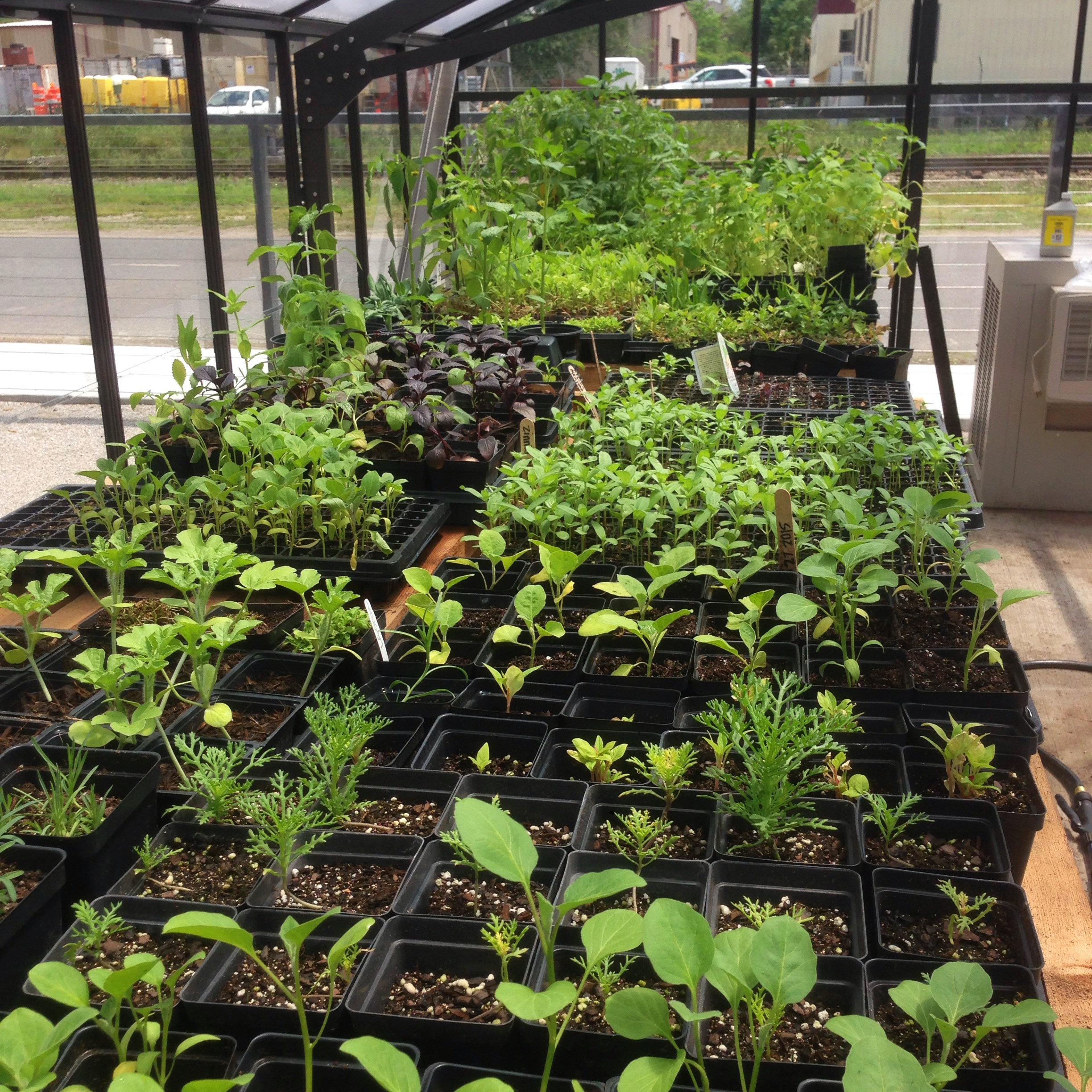 Press Street Gardens' Plant Share: sign up by February 14